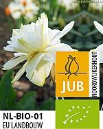 NARCISSUS CALGARY BIOLOGISCH