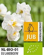 NARCISSUS BRIDAL CROWN BIOLOGISCH
