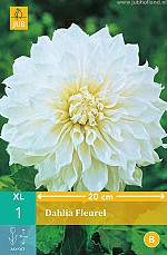 X 1 DAHLIA FLEUREL I