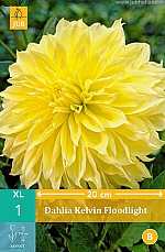 X 1 DAHLIA KELVIN FLOODLIGHT I