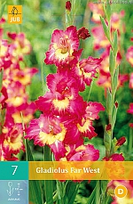 X   7 GLADIOLUS FAR WEST 12/14