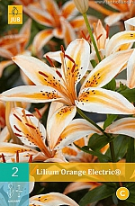 X 2 LILIUM ORANGE ELECTRIC® 14/16